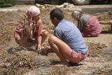 People Thrashing Peas Bhaktapur