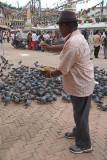 Feeding the Pigeons Boudha