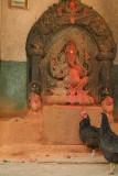 Chickens at Ganesha Shrine
