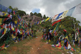 Prayer Flags above Monastery Pharping 01