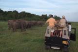 Watching the Elephants at Kaudulla