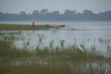 Great Egret at Anuradhapura Tank