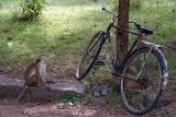 Monkey and Bike Polonnaruwa