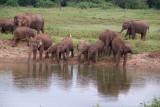 Elephants at the Water Kaudulla