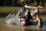 Mahoot Washing his Elephant