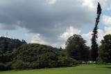 The Great Lawn Kandy Botanical Gardens