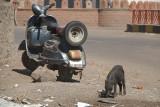 Piglet and Moped Bijapur
