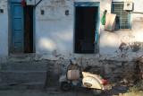 Moped Outside House Bijapur