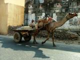 Camel Trots