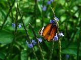 Butterfly Feeds
