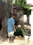 Laxmi the Elephant