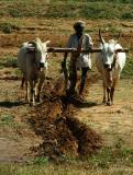 Ploughing a Crooked Furrow