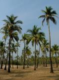 Through the Palms