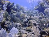 Aquarium West, Grace Bay