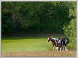 Horses_D2C_3096b.jpg