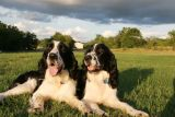 Walter (left) and Benny relaxing at Thorn Ridge