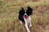 Playful Benny