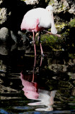 Spoonbill - Wildlife State Park