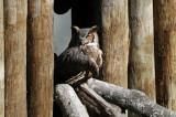 Owl - Wildlife State Park