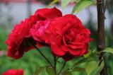 Rosa - Don Juan
