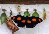 Spirogyra Butterfly Farm and Garden - San Jose, Costa Rica