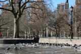 Pigeons & West View of the Park