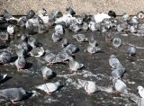 Pigeons Catching Sun Rays