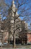 Elm Tree with Fifth Avenue View