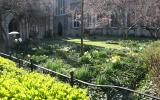 Grace Church Garden