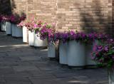 Petunia Planters - NYU Courant Mathematics Institute