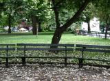 Park View - Fallen Catalpa Tree Blossoms