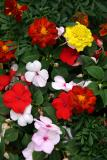 Impatiens & Marigold Flower Box - Dojo Restaurant