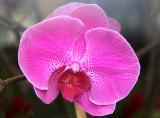 Orchid - University Designs Florist