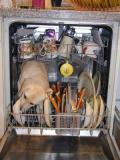 dog and dishes