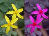 Ultra-violet flower patterns