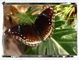 Butterfly Garden, Changi International Airport
