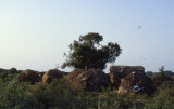 Ogaden Refugees