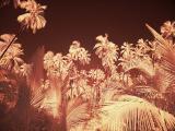 IR Palm