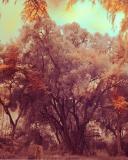 IR Trees