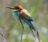 birds_italy