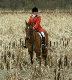 Hunting from Irish Fox Stables January 19th