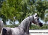 August Arabian Horse Farm Tour