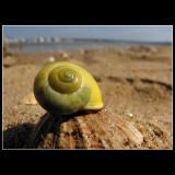 ...Shooting sea snails ...