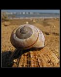 ... Snail ...