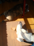 At home with the dogs today