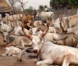 Sudan 2008 by Ellen Morgan