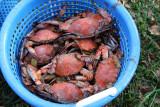 Buck's Crab Feast