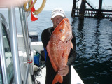 August Dive Trip in the Gulf of Mexico