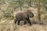 elephant dusting down