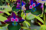 Space Orchids